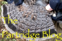 partridge-blog-box